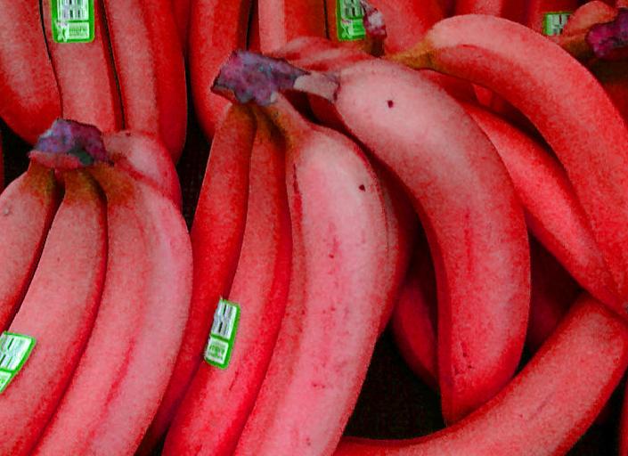 Chiêm ngưỡng loại chuối đỏ có giá cao ngất ngưởng vẫn hút khách 6
