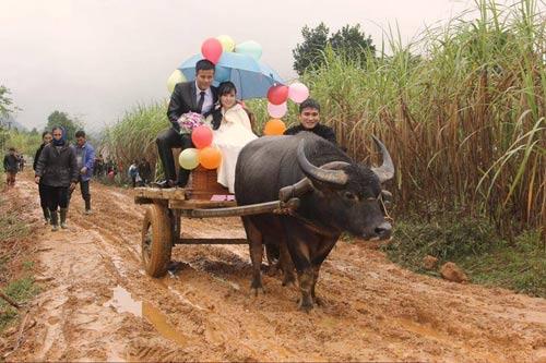 Rước dâu bằng xe bò gây xôn xao xứ Nghệ 5
