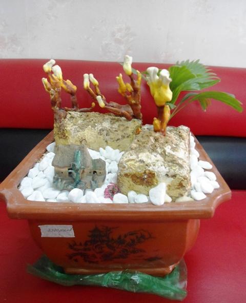 Rộ mốt chơi nấm linh chi bon sai giá bạc triệu ở Hà Nội 10