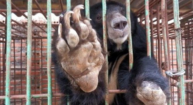 Gấu nuôi tại Quảng Ninh chết hàng loạt: Chuyển toàn bộ gấu về Trung tâm cứu hộ 5