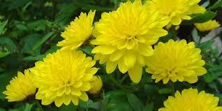 Những loài hoa nên cắm vào ngày Tết  5