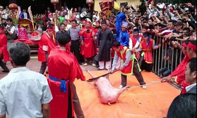 Vì sao dân làng Ném Thượng quyết chém lợn giữa sân đình? 5