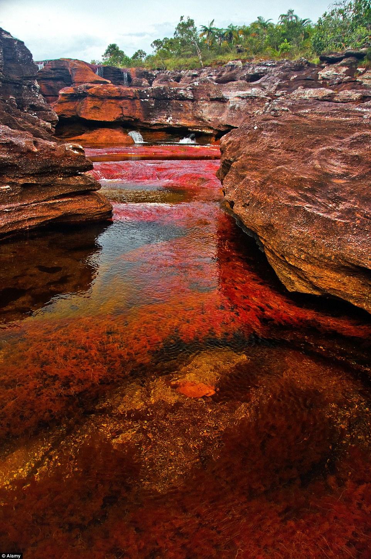 Sững sờ với vẻ tuyệt đẹp của dòng sông 7 sắc cầu vồng 6