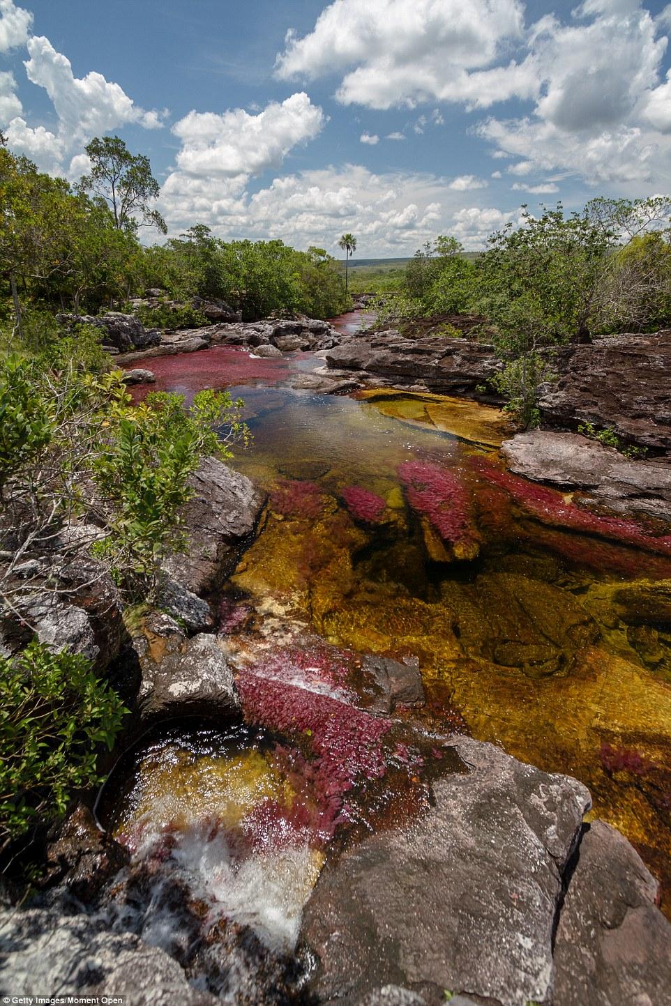 Sững sờ với vẻ tuyệt đẹp của dòng sông 7 sắc cầu vồng 11
