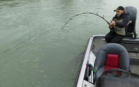Bắt được cá nheo quái vật có thể nuốt chửng một người ở Italy 6