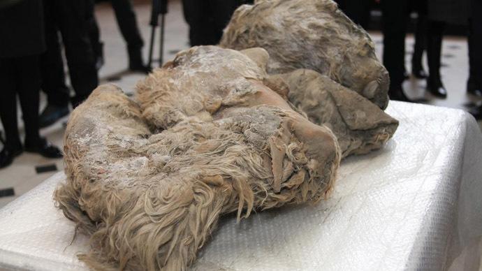 Thợ săn phát hiện xác tê giác tuyệt chủng từ 100 thế kỷ trước 6