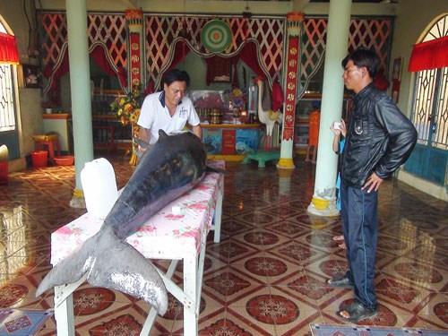 Cá voi nặng trên 2,5 tạ mắc lưới 5