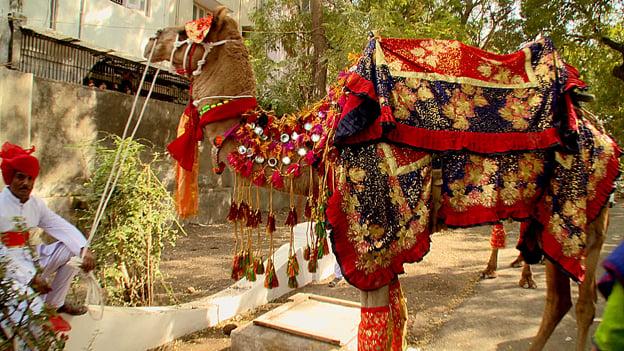 Đám cưới xa hoa như trong cổ tích của hoàng tử Ấn Độ 7