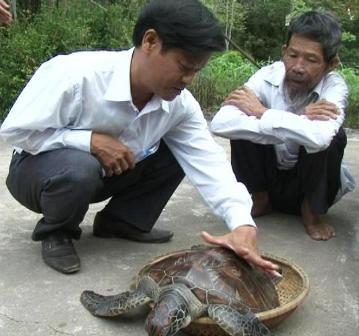 Bắt được rùa biển quý hiếm trên phá Tam Giang 4