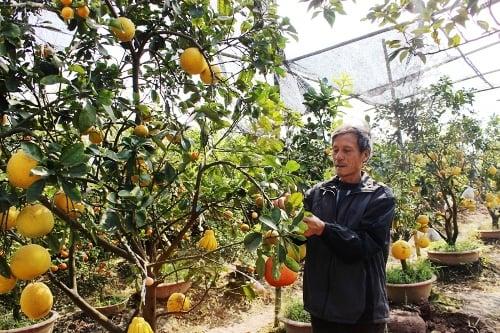 Tuyệt chiêu hốt bạc khiến đại gia lác mắt của lão nông Việt 6