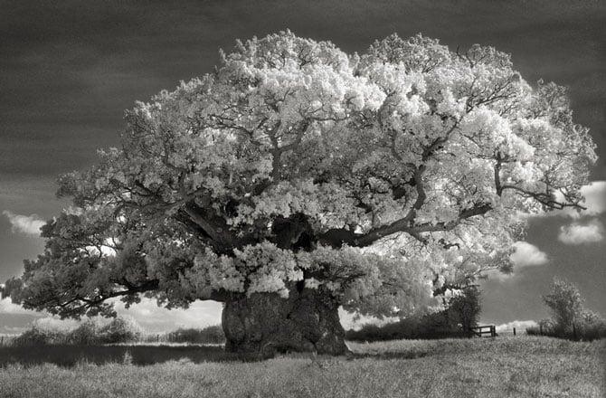 Chiêm ngưỡng những loài cây già cỗi nhất trên thế giới 2