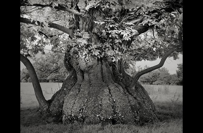 Chiêm ngưỡng những loài cây già cỗi nhất trên thế giới 4