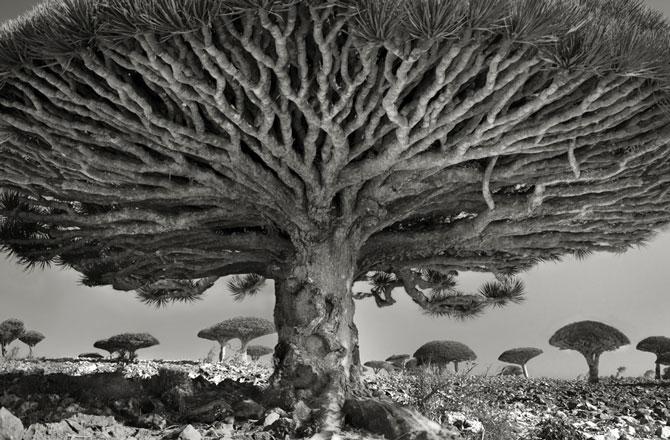 Chiêm ngưỡng những loài cây già cỗi nhất trên thế giới 1