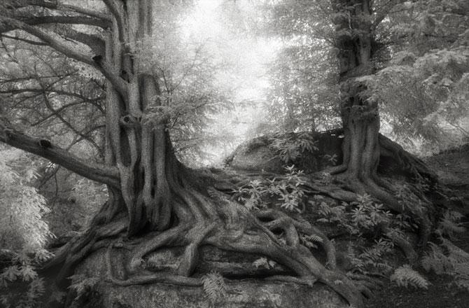 Chiêm ngưỡng những loài cây già cỗi nhất trên thế giới 5