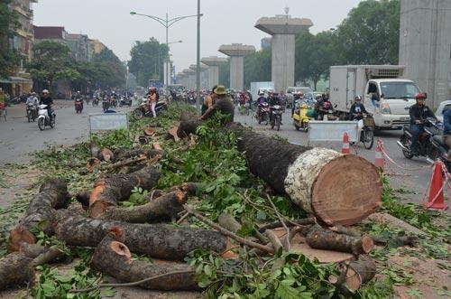 """""""Hà Nội chặt 6.700 cây xanh không cần phải hỏi dân"""" 7"""