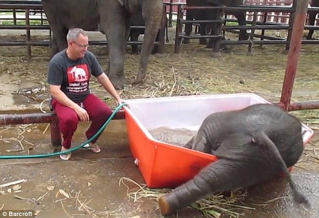 Cảnh tắm thùng hài hước của chú voi con 7