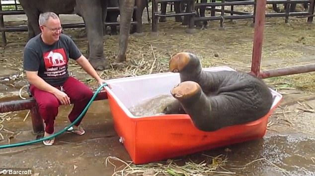 Cảnh tắm thùng hài hước của chú voi con 8
