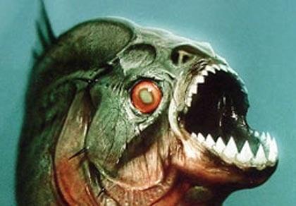 9 loài quái vật thời tiền sử đã bị tuyệt chủng 11