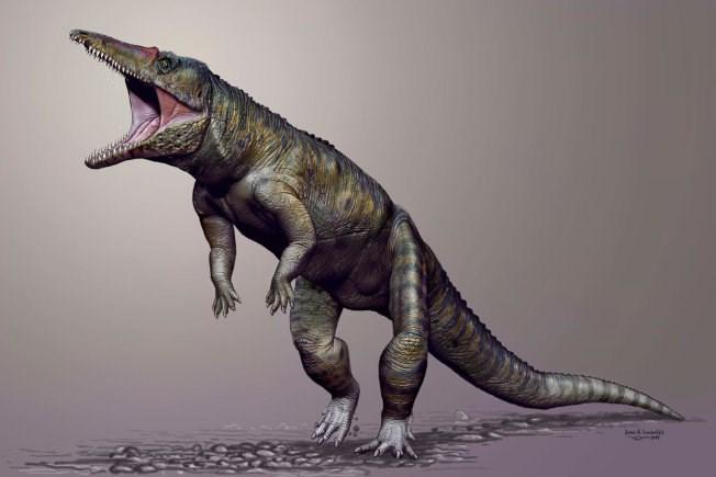 Ngắm cá sấu đi bằng 2 chân từng thống trị trái đất trước khủng long 5
