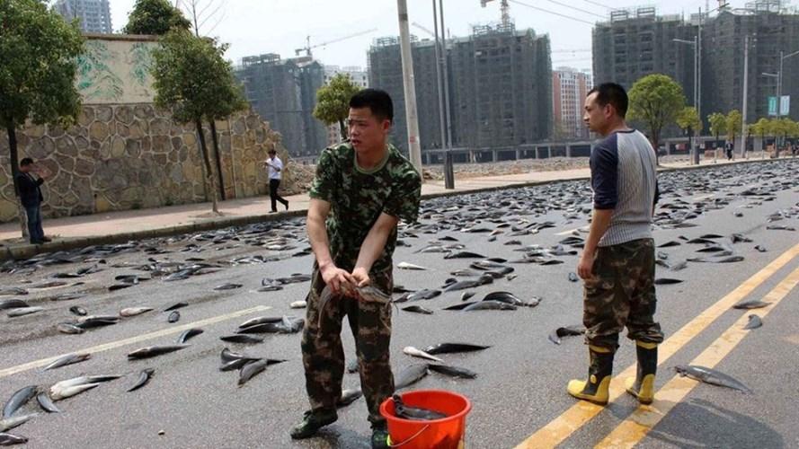 Ngỡ ngàng cảnh 6,8 tấn cá tra tràn ngập trên đường phố Trung Quốc 7