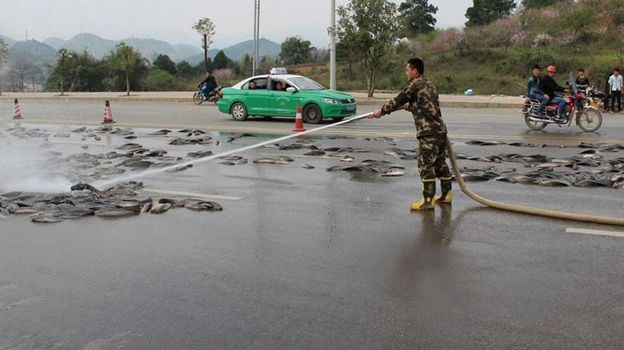 Ngỡ ngàng cảnh 6,8 tấn cá tra tràn ngập trên đường phố Trung Quốc 8