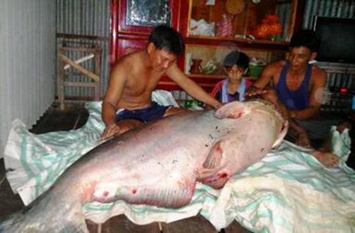 Cận cảnh thủy quái Mekong trong nồi lẩu trăm triệu đại gia Sài Gòn 5
