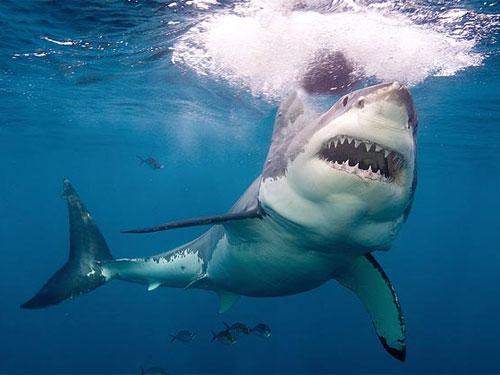 Du khách tử vong vì bị cá mập tấn công khi đang bơi trên biển 4