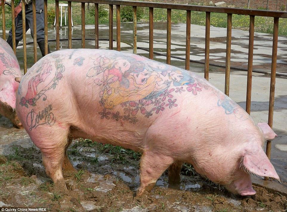 Thu tiền tỷ từ việc xăm hình lên lưng lợn 7