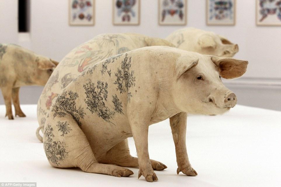 Thu tiền tỷ từ việc xăm hình lên lưng lợn 8
