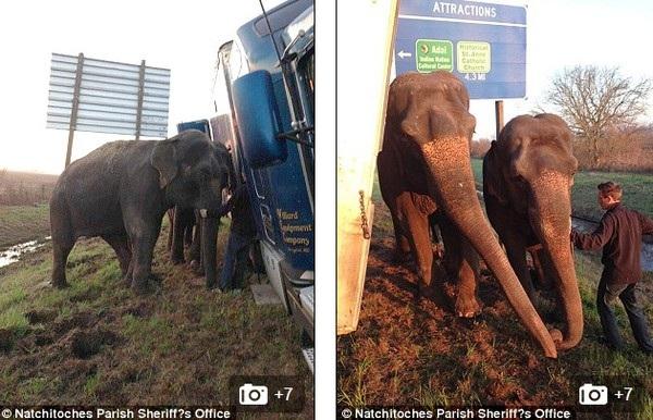 Video: 2 chú voi đẩy nghiêng xe tải 18 bánh 4