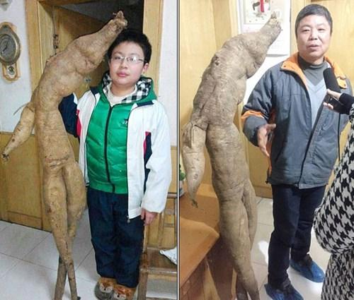 Đào được củ sắn dây khổng lồ hình người ở Trung Quốc 6