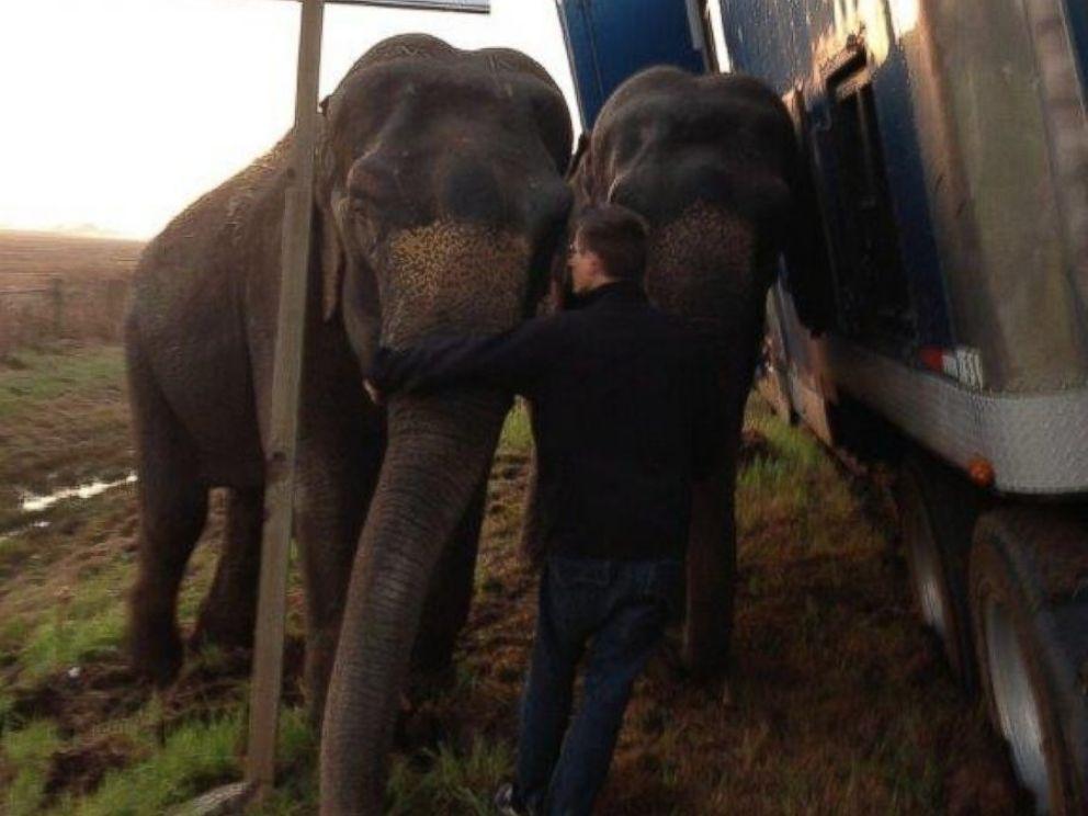 Hai chú voi gồng mình đỡ xe tải khỏi bị lật nhào 4