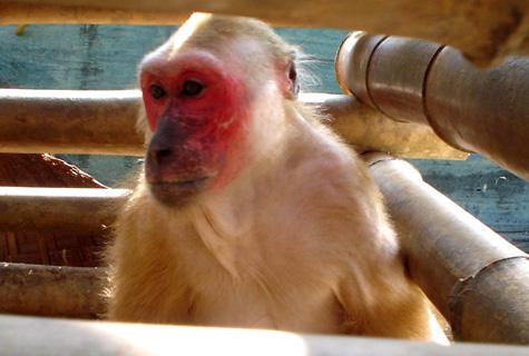 Hình ảnh Những loài động vật kỳ dị còn tồn tại trên thế giới số 4