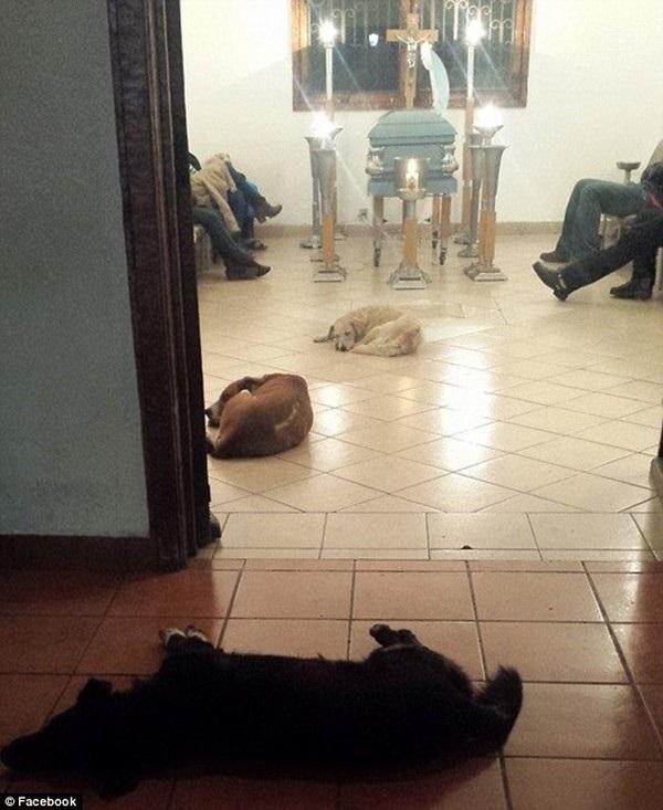 Đàn chó hoang tập trung dự đám tang người thường cho chúng ăn 6