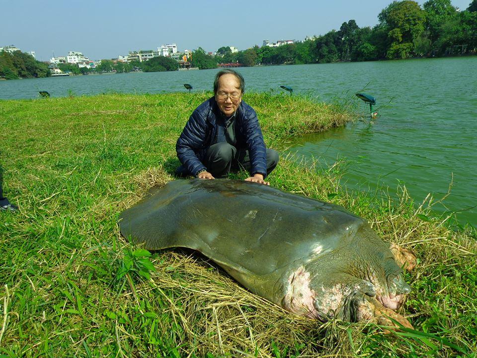 Điểm tin nóng ngày 30/3: Cụ rùa hồ Gươm qua đời chỉ là tin đồn 2