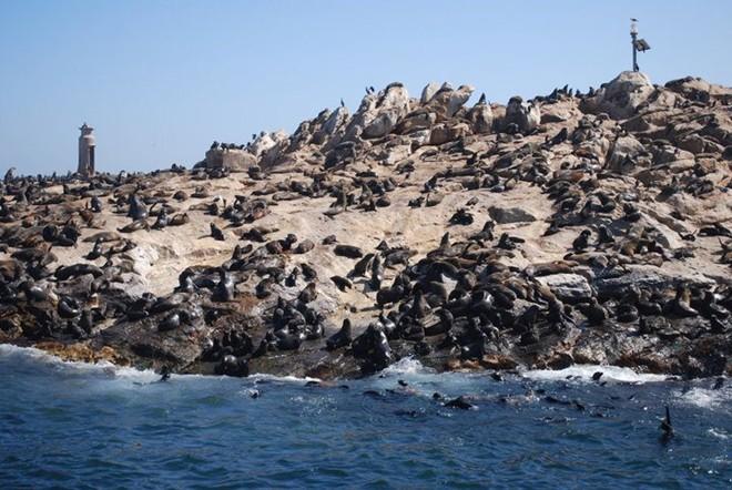 Hình ảnh Độc đáo những hòn đảo không người sống, chỉ có động vật số 4