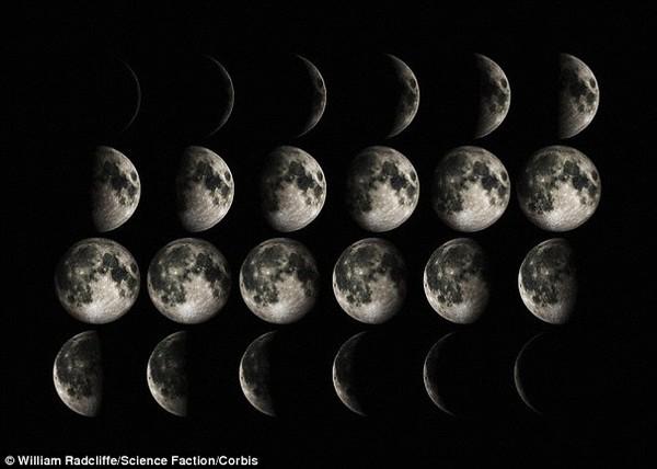 Kỳ lạ loài hoa chỉ nở khi trăng tròn 4