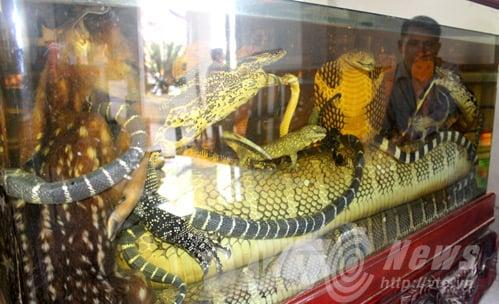 Hình ảnh Bể ngâm rượu nhà đại gia: Bào thai hổ nguyên con, đại hổ chúa 8m vùi thây số 1