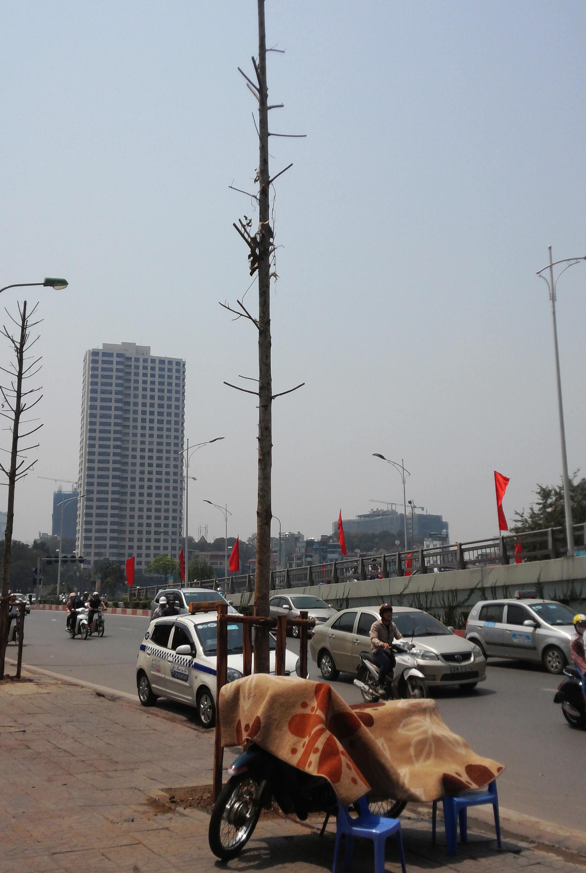 Hà Nội: Khốn khổ nắng nóng đường phố 'trơ bóng' cây xanh 4