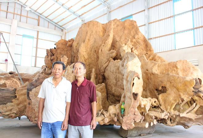 Chơi ngông như đại gia 30 tỉ không bán gốc cây 30 tấn 2