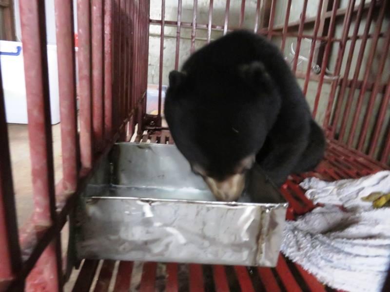 Giải cứu thành công 1 cá thể gấu chó từ vụ buôn lậu 3