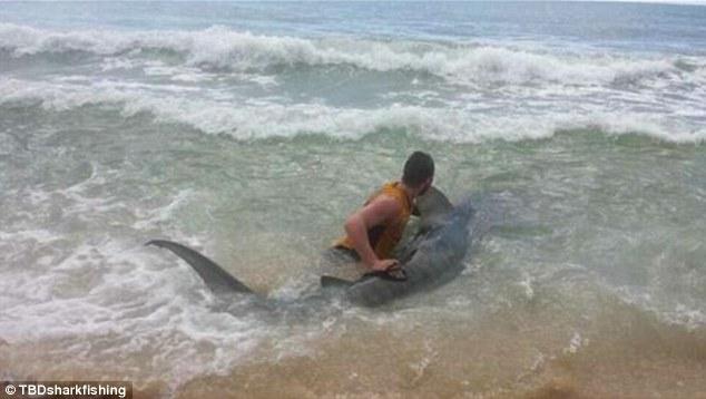 """Chàng trai """"vật lộn"""" trong 3 giờ đồng hồ để bắt cá mập dài 4 mét 6"""