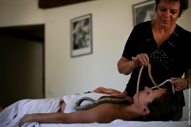 Kinh hãi cô gái để hàng chục con rắn bò trên lưng trần 2