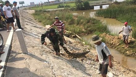 Xác minh xuất xứ cá sấu 30kg nằm phơi nắng trên quốc lộ 1A 1