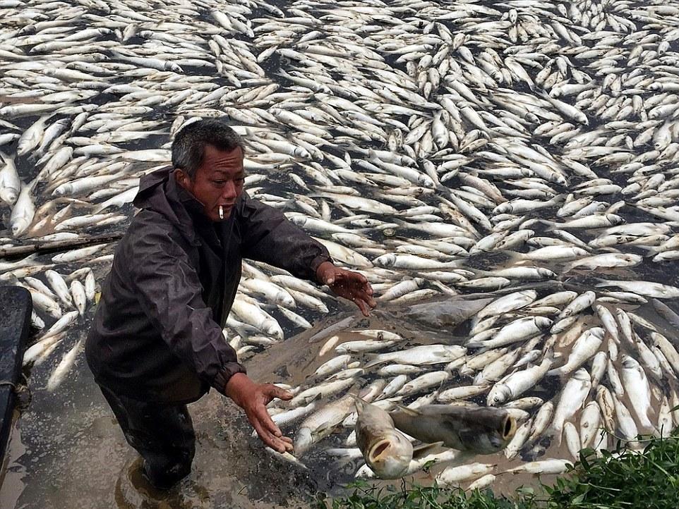 Hơn 100 tấn cá chết trắng hồ chỉ sau 1 đêm 5