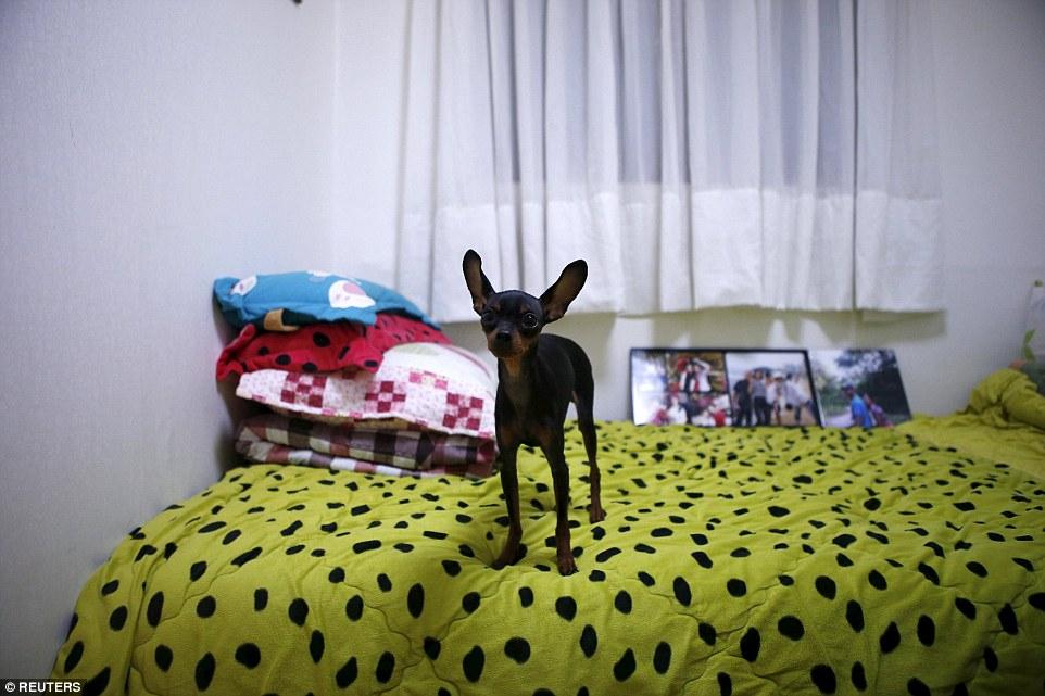 Thảm họa chìm phà Sewol: Những phòng ngủ lạnh người của nạn nhân 11