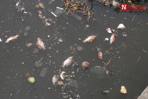 Đã xác định nguyên nhân cá chết trắng kênh Nhiêu Lộc-Thị Nghè 3