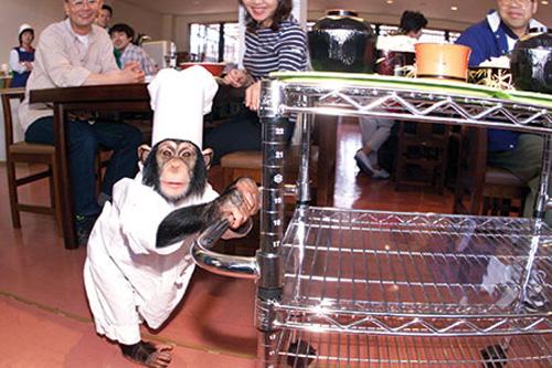 Hình ảnh Khám phá 12 nhà hàng độc và lạ nhất thế giới số 8
