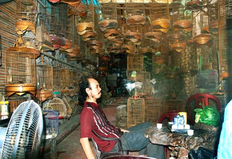 Đệ nhất đại gia đất Bắc: Chơi chim tiền tỉ, chi 250 triệu/năm nuôi chim 1