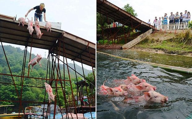 """Trung Quốc dùng """"lợn bay"""" mua vui cho khách du lịch 1"""